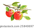 apple, apples, fruit 25840697