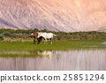 Nubra valley nature with horses in Leh district 25851294