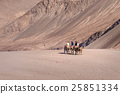 Camel safari at Hundar sand dunes in Nubra Valley 25851334