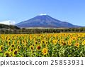 Fuji Sunflower 25853931