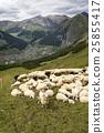 山羊 动物 山峰 25855417