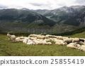 山羊 动物 山峰 25855419