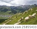 山羊 动物 山峰 25855433