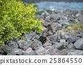 marine, iguana, sea 25864550