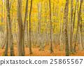 니가타 _ 미인 숲 단풍 25865567