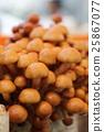 버섯, 식량, 음식 25867077