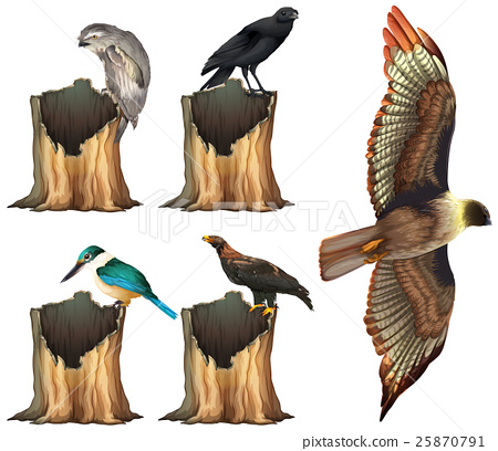 Wild birds on log 25870791