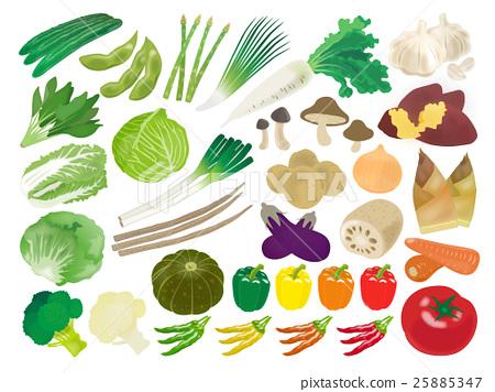 蔬菜 矢量 小黃瓜 25885347