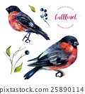 Watercolor Bullfinch And Berries Collection. 25890114