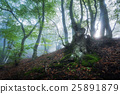 Mystical spring forest in fog. Magical old trees  25891879