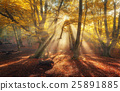 Autumn forest in fog with sun rays. Magical trees 25891885