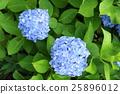 花朵 花 花卉 25896012