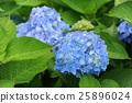 花朵 花 花卉 25896024