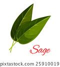 sage, herb, leaf 25910019