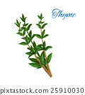 Thyme branch herb with leaves isolated icon 25910030