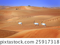 Arabian Oryx 25917318