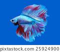 热带鱼 鱼 水族馆 25924900