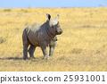 African white rhino 25931001