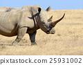 Rhino on savannah in Africa 25931002
