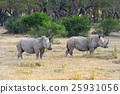 African white rhino 25931056