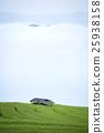 ข้าว,พื้นหญ้า,ทุ่งนา 25938158