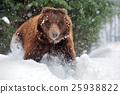 animal, animals, bear 25938822