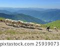 Sheep 25939073