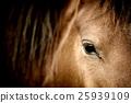 Eye horse 25939109
