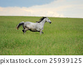 Horse 25939125