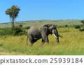 Elephant 25939184