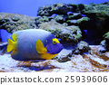 Underwater scene 25939606