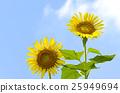 花朵 花卉 花 25949694