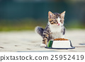 Cute little kitten with a bowl of granules at home 25952419