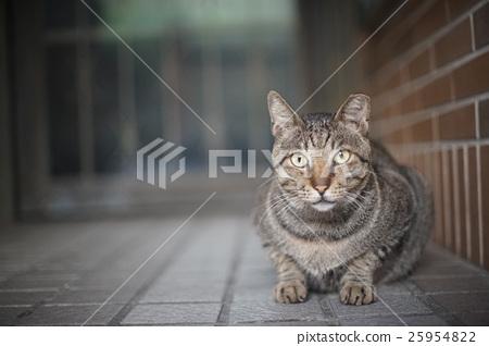 野貓 25954822