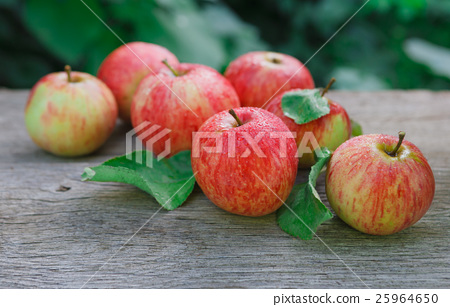 Stock Photo: Red and yellow apples harvest in fall garden