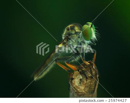 生物,昆蟲,昆蟲,飲食 25974427