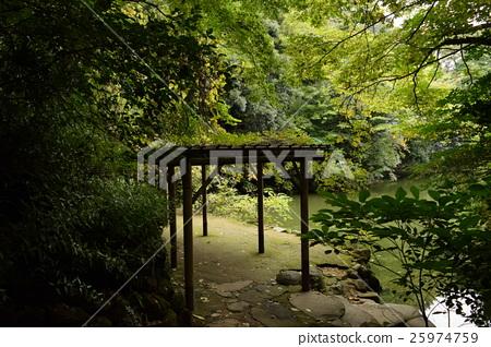 도쿄 대학의 산시로 연못 25974759