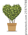 Heart-shaped trees in pots. 25974788