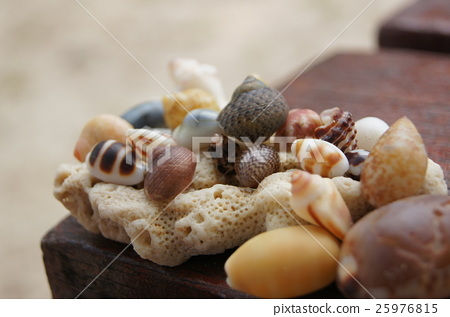 貝殼 25976815
