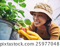Strawberry season 25977048