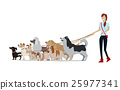 Dog Walking Banner. Woman Walk with Different Dogs 25977341