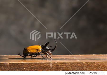 Beetle on wooden table 25983666