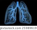 human lung breath 25989619