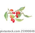산수유, 열매, 과실 25990646