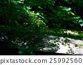 녹색, 가을, 하늘 25992560