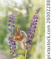 flower stelts 26002288
