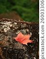 楓葉 2 26003306