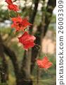 楓葉 5 26003309