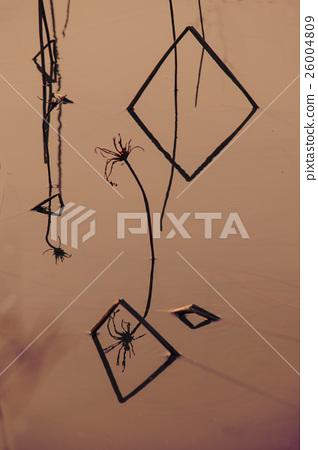 荷梗的幾何圖案 26004809