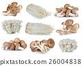 Shiitake mushroom , Enoki mushroom 26004838